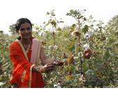 Nachhaltiger Baumwollanbau